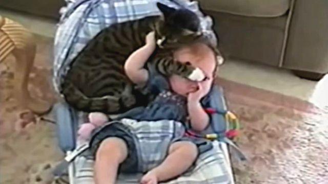 catsnbaby6