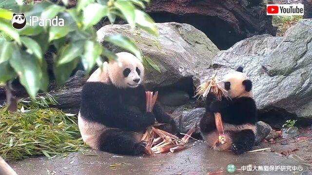 bambooshoots1_640