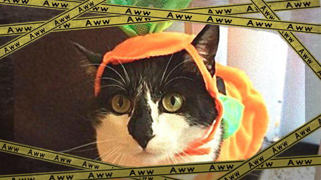 cats3a_e-frame