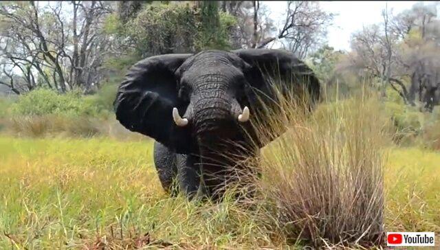 elephanttantrum1_640