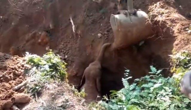 elephantsalutes3_e