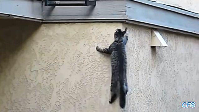 spidercat5