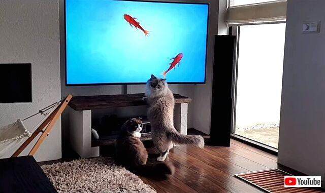 tv4cats0_640