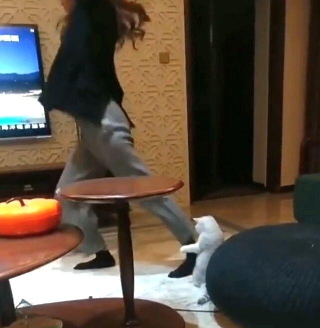 dancingcat1_640