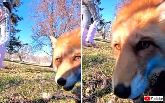 foxtookcamera1_640