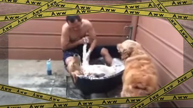 dogspa [www-frame