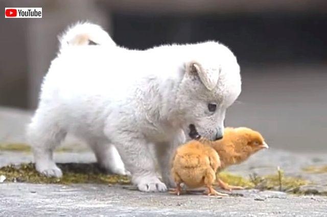 puppynchicks1_640