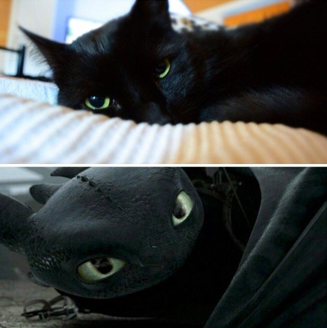 cats-toothless-lookalikes-37-57cec968bb901__700_e