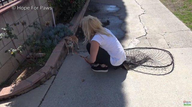 homelessdog5_e