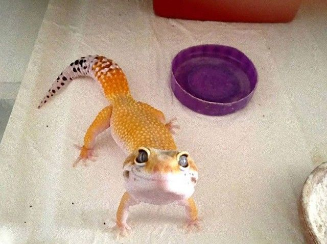 cute-reptiles-109__605_e
