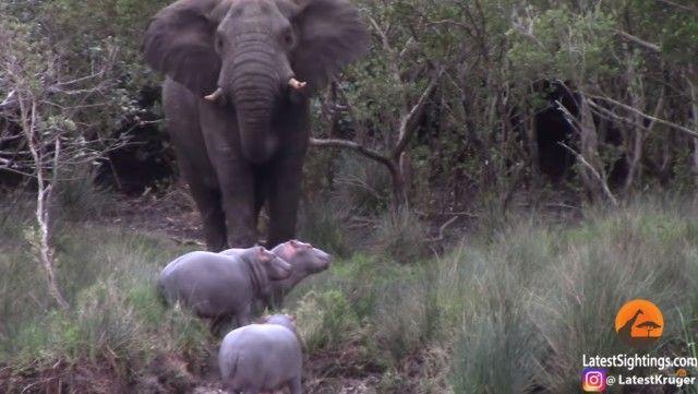 elephantnhippos3_e