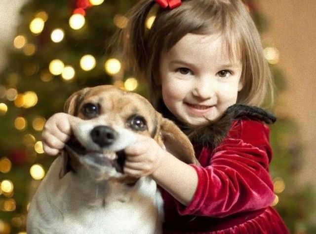 Cute-Christmas-Animals-31-630x468_e