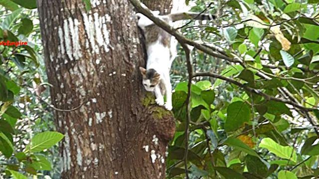 catnsquirrel5