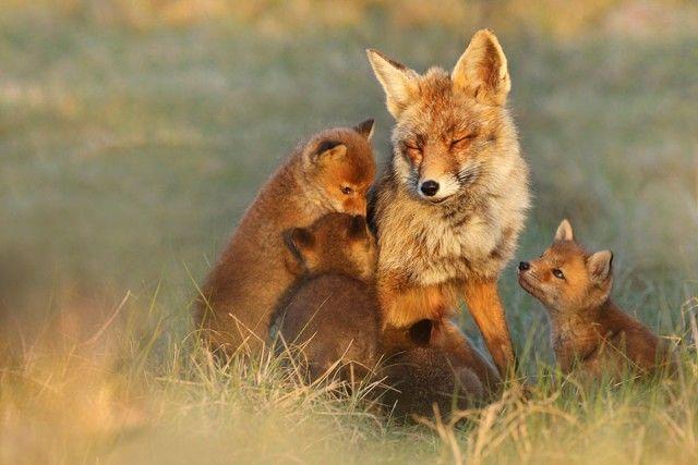 fox13_e