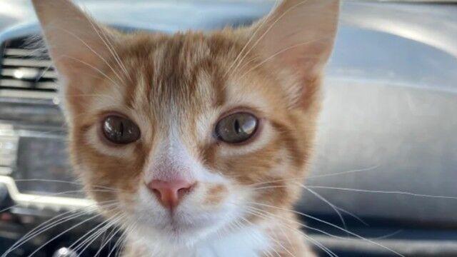 初めて猫を飼い始めました!人生初の子猫を海外掲示板に紹介したところ、Reddit民大喜び