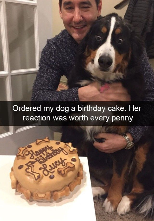 hilarious-dog-snapchats8_e