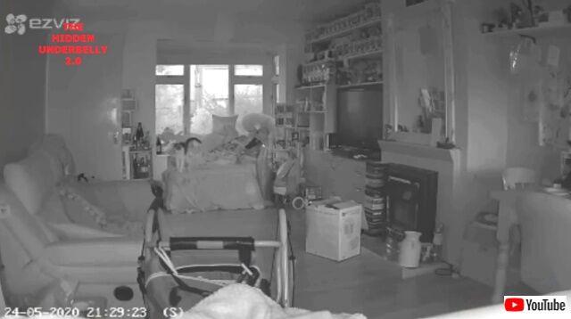 ghostcat2_640