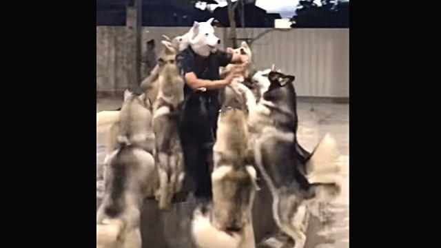welcomingdogs2