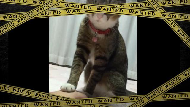 cat-1 [www-frame