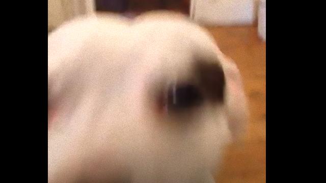 dog-3_e