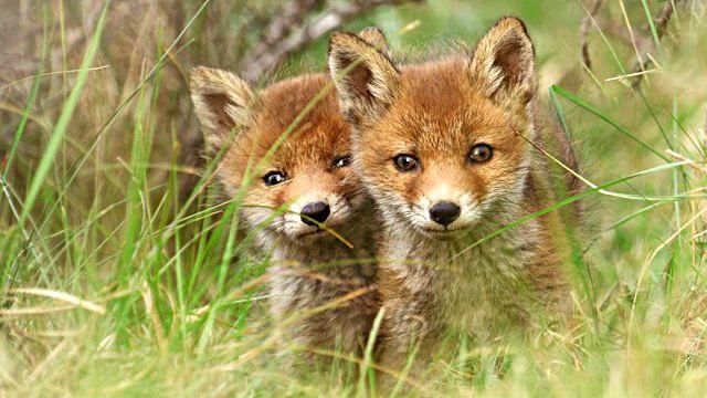 fox5_ea