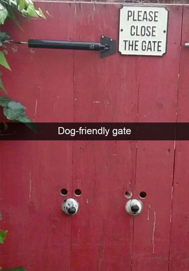 hilarious-dog-snapchats14_e
