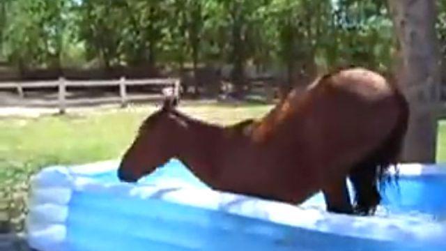 paddlinghorse4