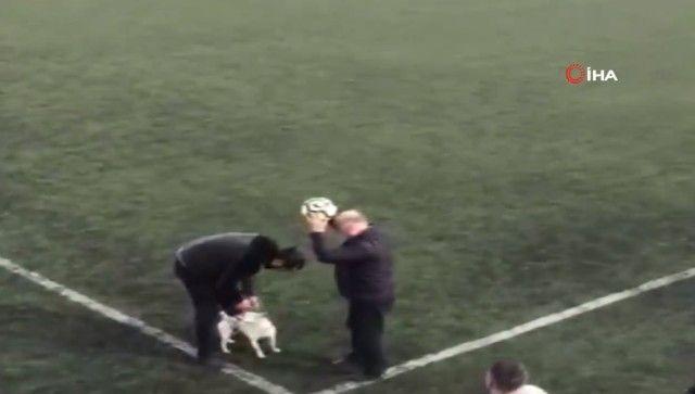 footballdog17_e