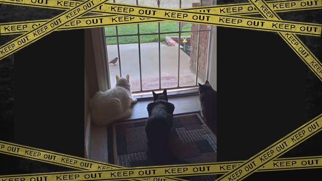 birdcatdog1-frame