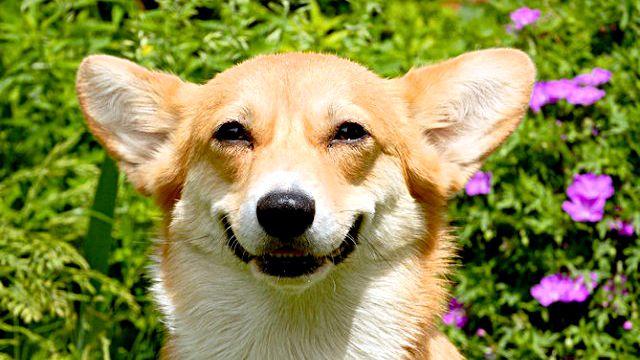 smilingfaces9_ea