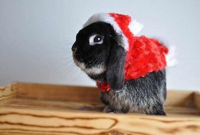 Funny-Christmas-animals17_e