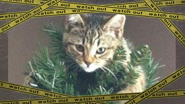 treecat [www-frame