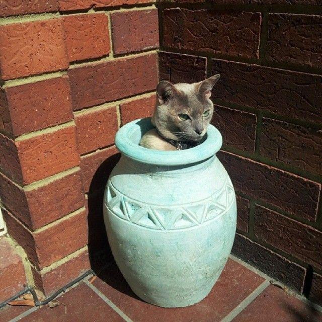 cat-plant11_e