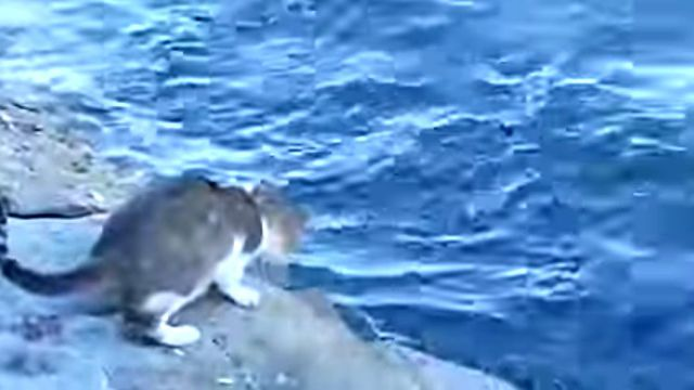 fishingcat2