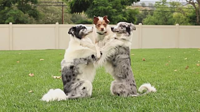 dogtricks3