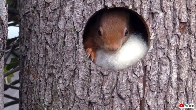 squirrelsdrey0_640