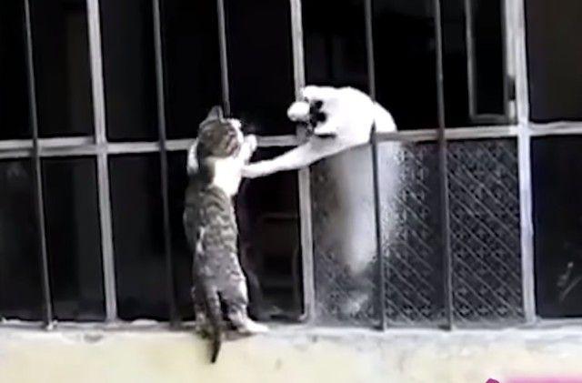 momcats2_e