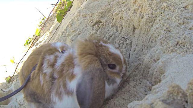 rabbitnbeach3