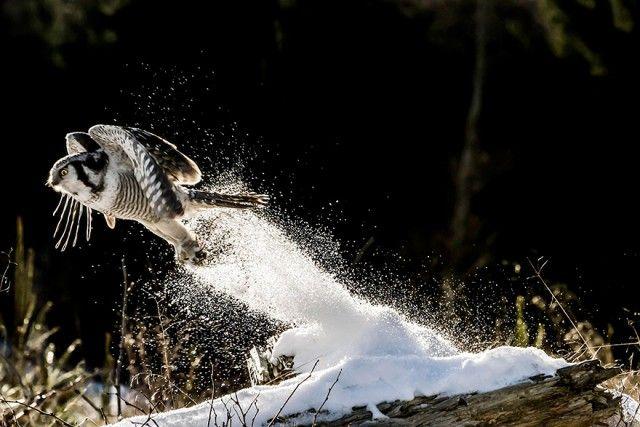 owl-photography-4__880_e