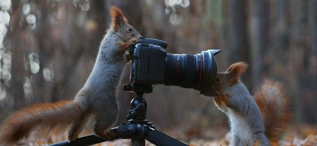 squirrel-photography-russia-vadim-trunov-13_e