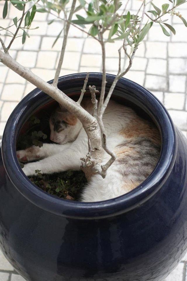 cat-plant15_e