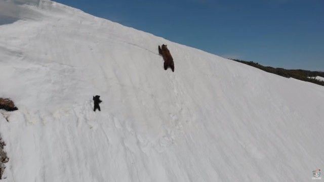 bearcub4_e
