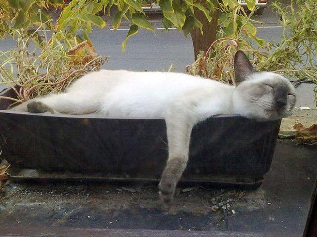 cat-plant12_e