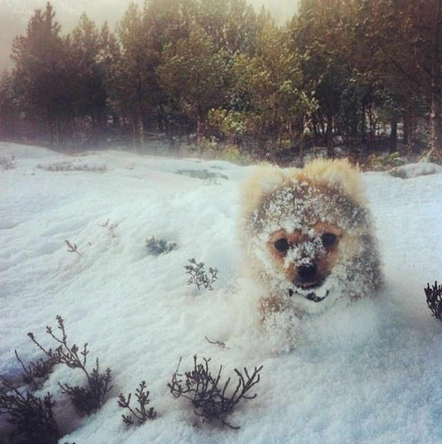 funny-animals-first-snow-cats-dogs29_e