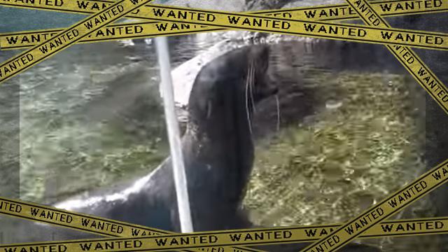 seal [www-frame