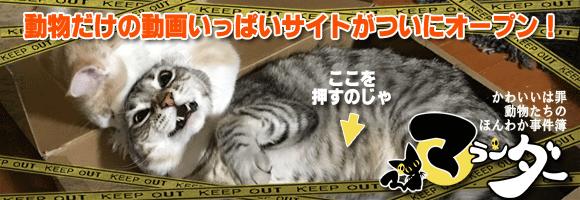 動物だけの動画いっぱいサイトがついにオープン!