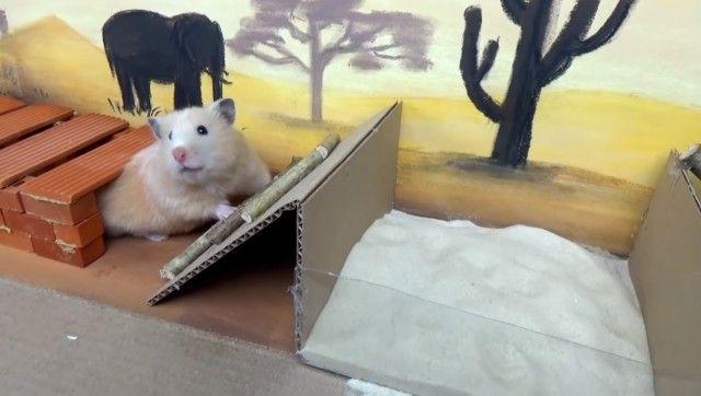 hamster0_e