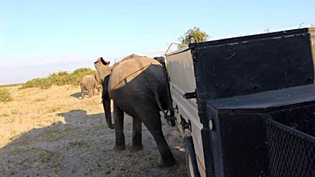 elephantkick4
