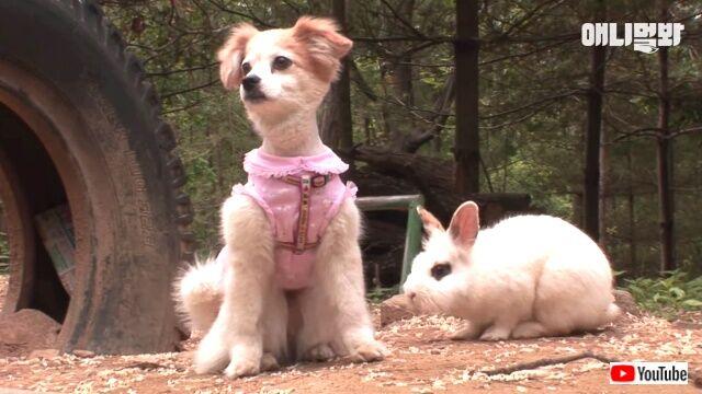 ウサギと犬はソウルメイト?散歩の途中で出会った2匹、いつか親友同士になる