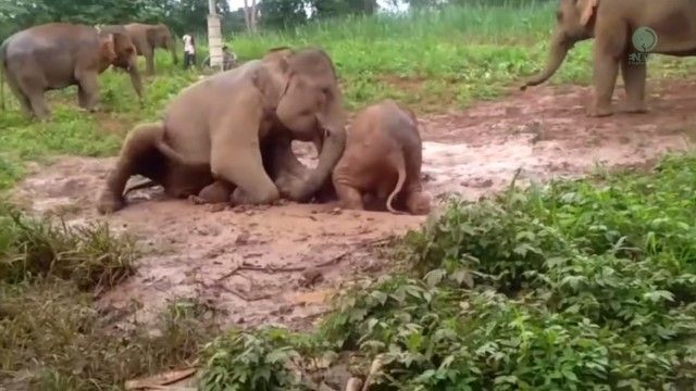 babyelephant4_e